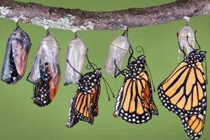 transformação em borboleta